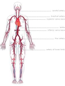 Look at dem veins